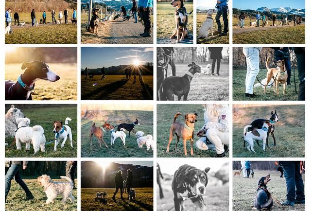 Wie lernt mein Hund – Lerntheorie, was ist das? (1)