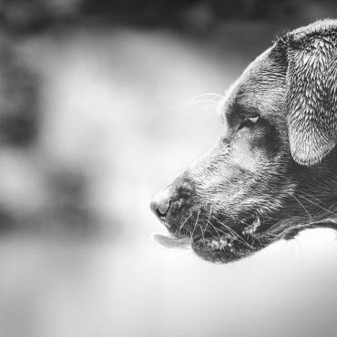 Wenn dein Hund nicht hören möchte…