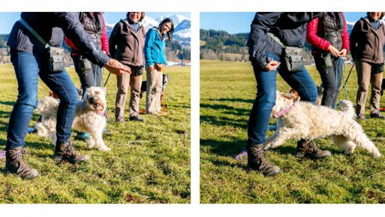 Wochenend-Challenge – Acht durch die Beine