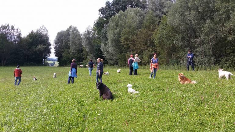 Wie lernt mein Hund Teil 2 b – Details