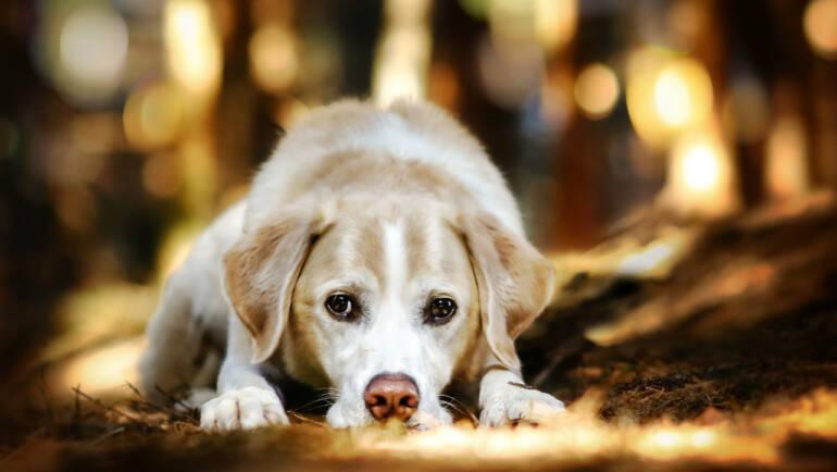 Bedürfnisse, Belohnungen und Motivation im Zusammenleben mit deinem Hund – Teil 1