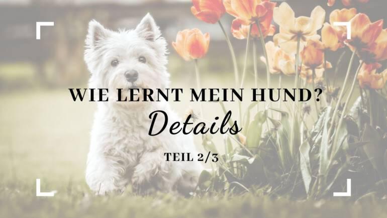 Wie lernt mein Hund – Details – Teil 2/3