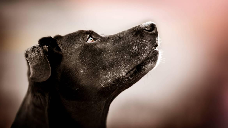 Lerngesetze – wie wichtig für eine erfolgreiche Hunderziehung?