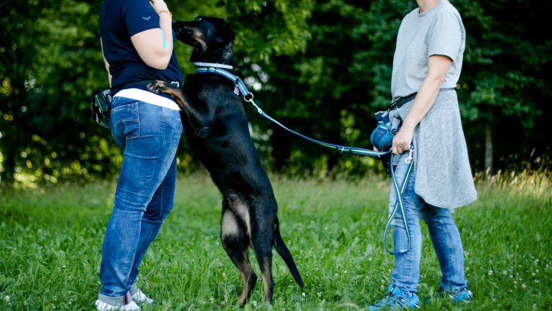 Warum springen Hunde Menschen an (Teil 1)