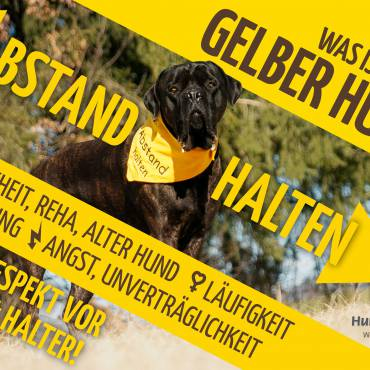 """Was sind """"Gelbe Hunde""""? Die Kampagne für mehr Respekt und Verständnis"""