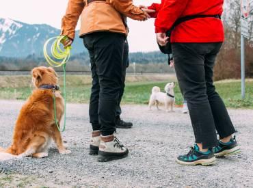 Wie kann ich meinem Hund nun das Anspringen abgewöhnen? (Teil 2)