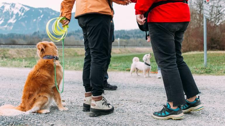 Wie kann ich meinem Hund nun das Anspringen von mir abgewöhnen? (Teil 3)