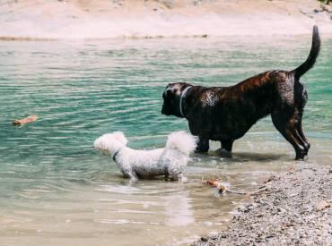 Bedürfnisse, Belohnungen und Motivation im Zusammenleben mit einem Hund – Teil 2