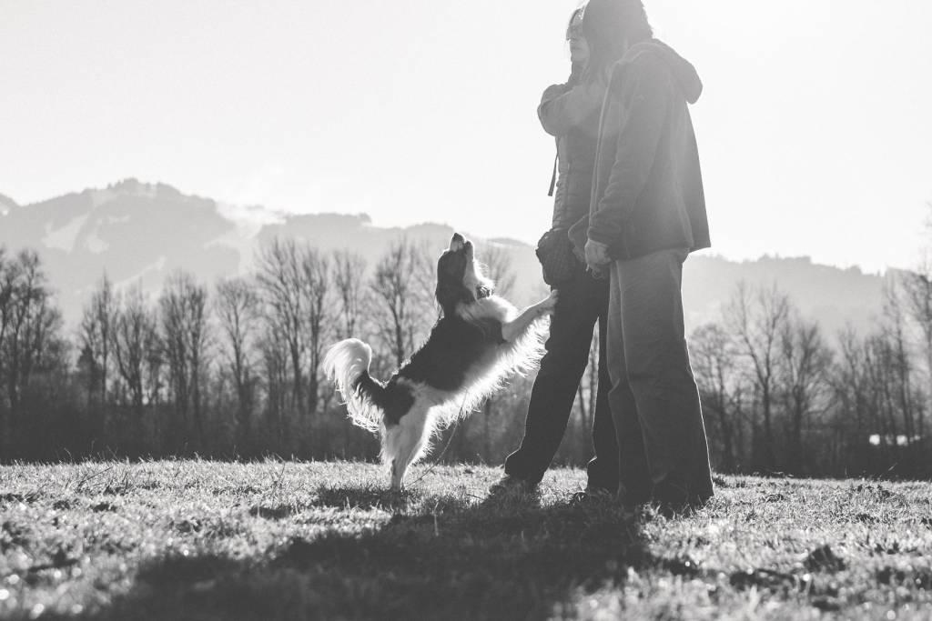 Die Hundeschule im Allgäu - mit Spaß und Lernen einen gemeinsamen Weg gehen