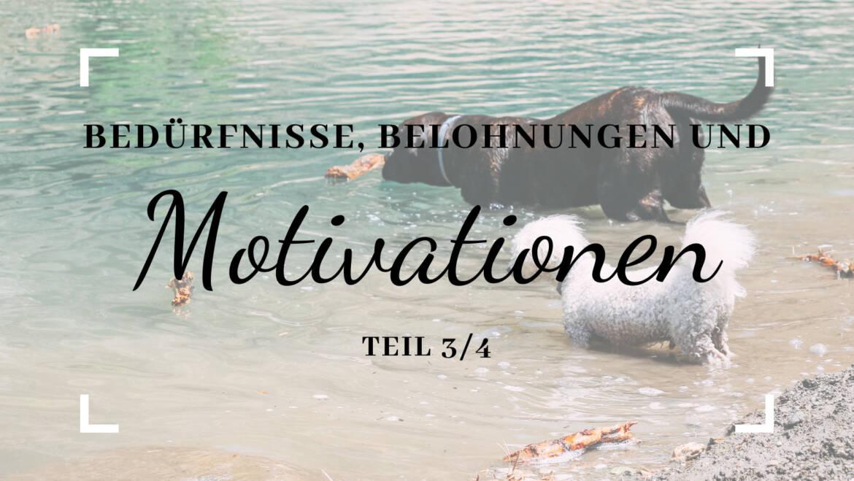Bedürfnisse, Belohnungen und Motivation – Teil 3/4