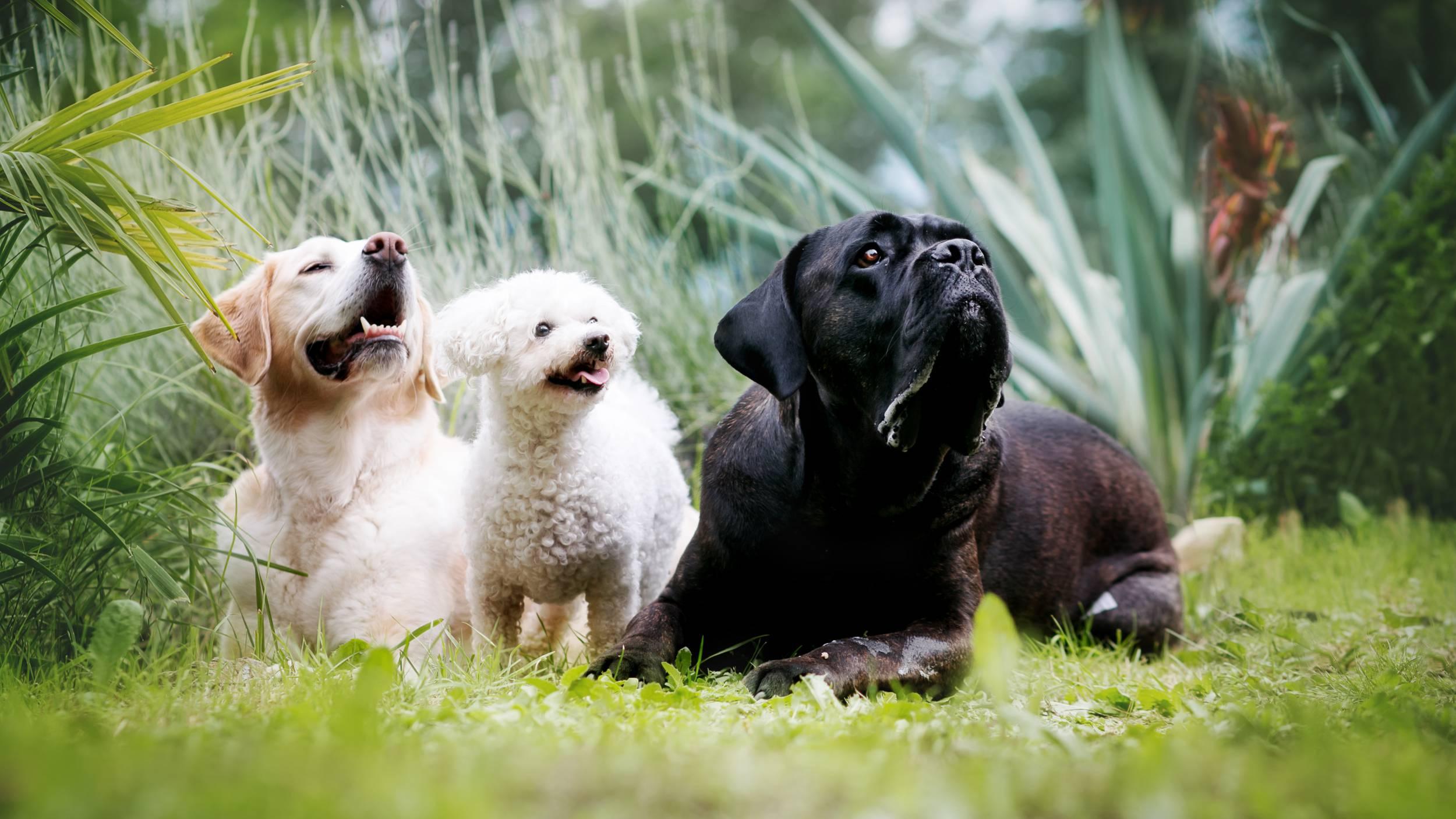 Hundeschule Allgäu - Vorbereitung - Training - Miteinander arbeiten