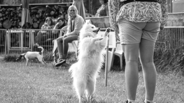 Warum dein Hund das tut was er tut (Teil 2)