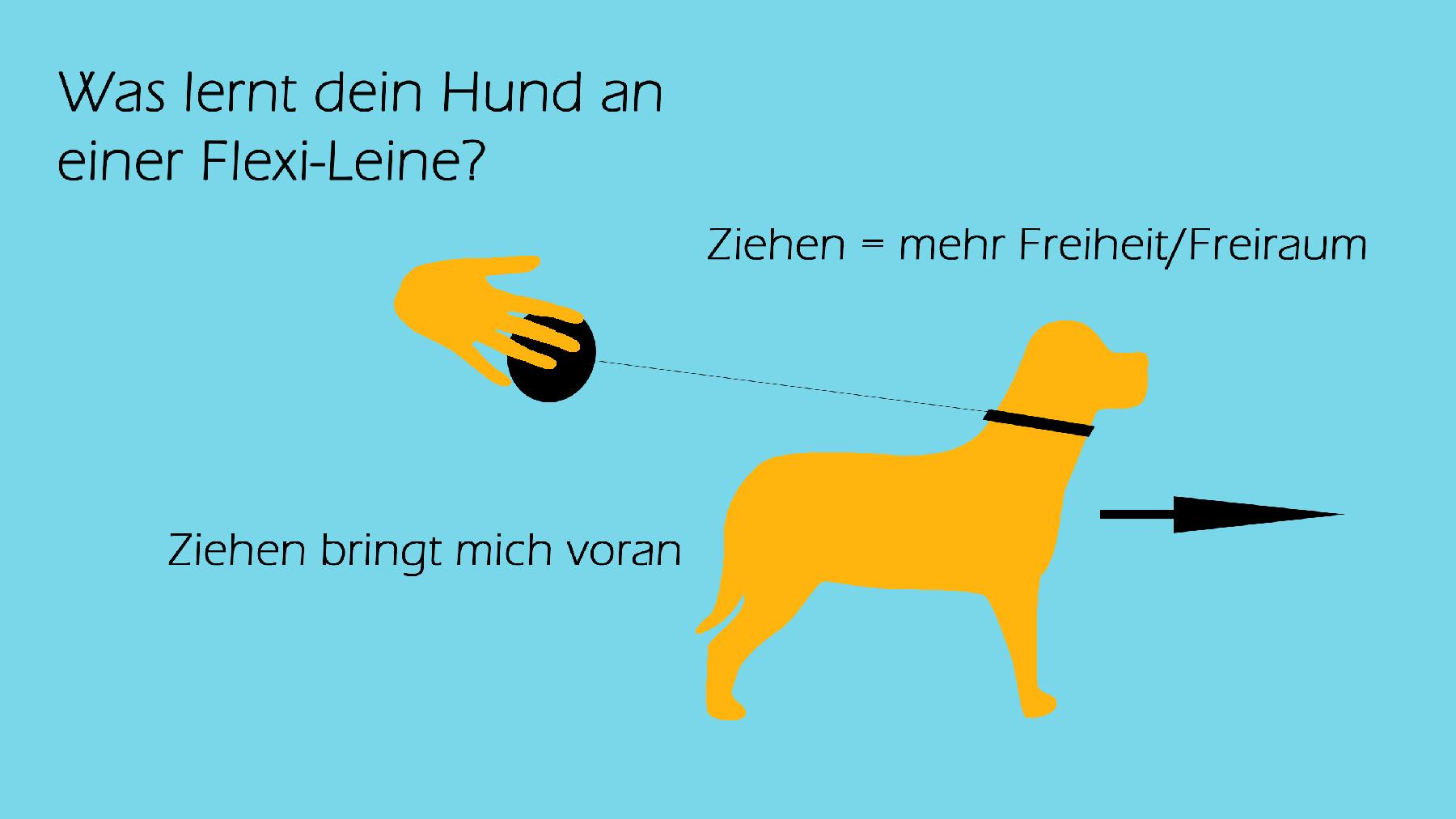 Hundecoach Allgäu