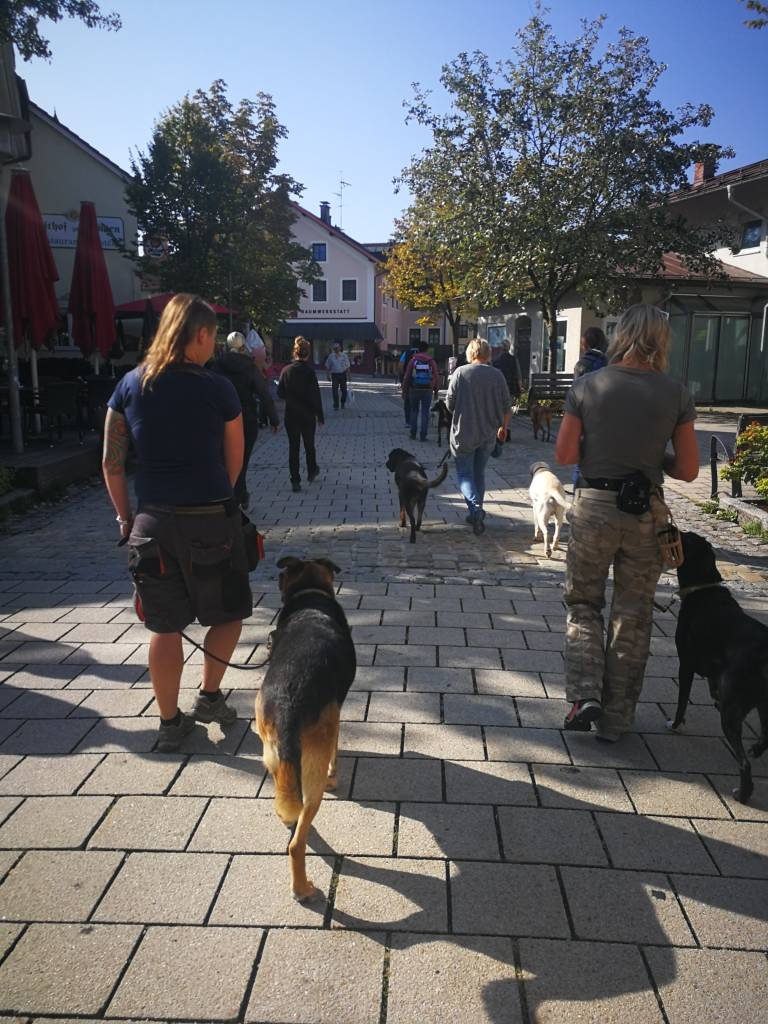 Alle Prüflinge haben die Hundeführerschein Prüfung erfolgreich bestanden