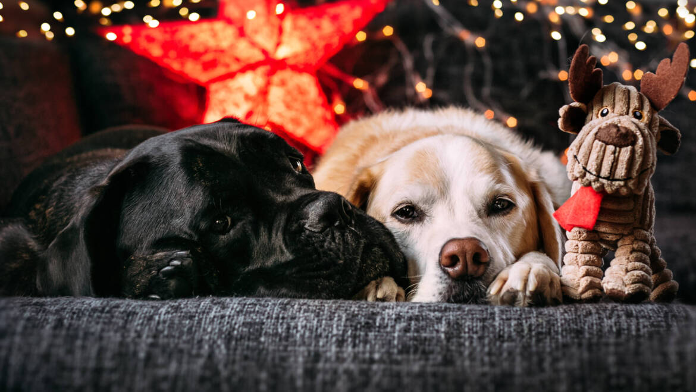 Weihnachtszeit ist Dekozeit – Was ist zu beachten