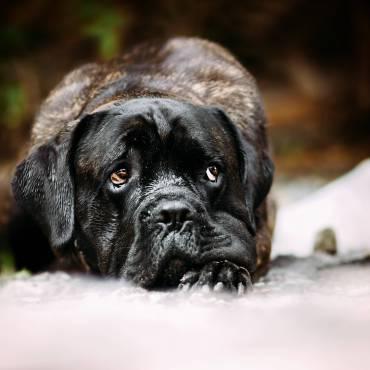 Wie gewöhne ich meinem Hund das Anspringen von Fremden ab? (Teil 4)