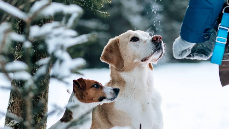 Geheimnis # 2: Lobe und bestätige deinen Hund für alles was er richtig macht!