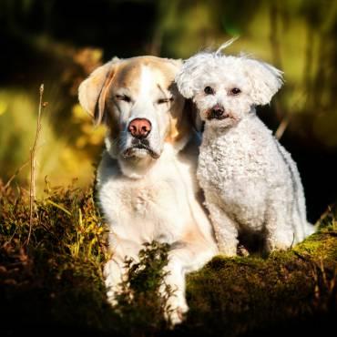 Geheimnis # 4: Erziehung und Ausbildung deines Hundes finden im Alltag statt!