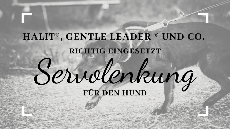 Halti®, Gentle Leader® und Co. – richtig eingesetzt, die Servolenkung für den Hund