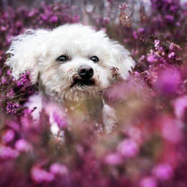Ich kauf mir mal eben einen Hund… (2)