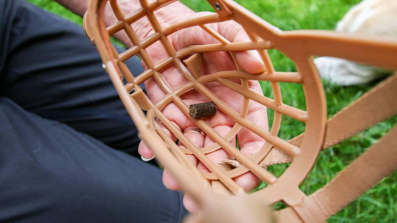 Die  Maulkorbgewöhnung – richtig in 6 Schritten gemacht, kein Hexenwerk
