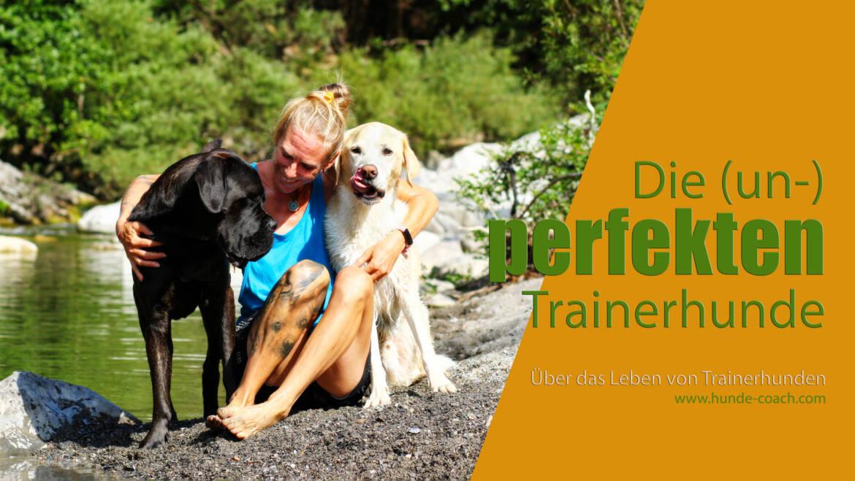 Die (un-) perfekten Trainerhunde