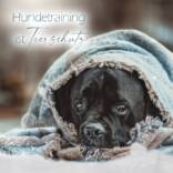 Hundetraining-ist-Tierschutz.jpg