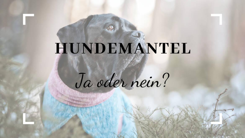 Hundemantel – ja oder nein?