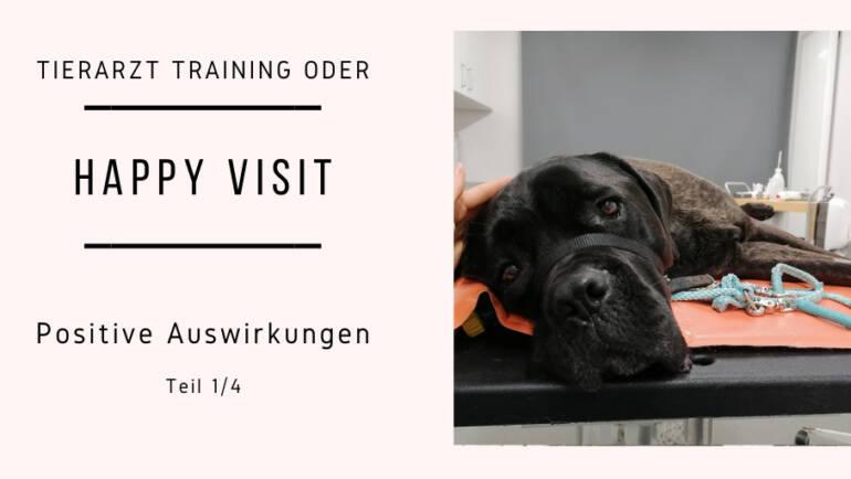 Tierarzt Training oder auch Happy Visit Teil 1/4