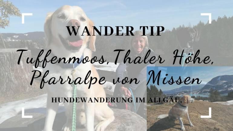 Hundewanderung im Allgäu – Tuffenmoos, Thaler Höhe, Pfarralpe von Missen