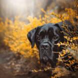 Sensiebelfotografie-Bagira-Hundefotografie-145web.jpg